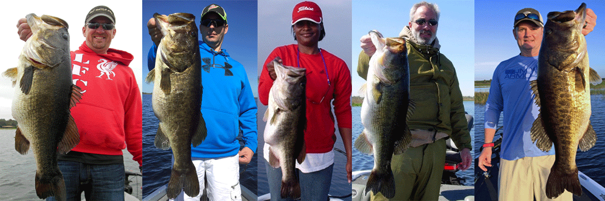 lake toho bass guide
